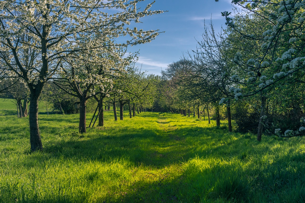 Nieuwbouw Bloesemgaarde Groessen